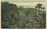 Picture of Nutmeg & Clove Plantation