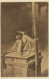 Picture of A Monkey In Captivity