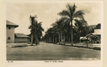 Picture of A Road of Palms