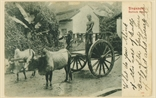 Picture of Bullock Cart, Singapore