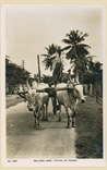 Picture of Bullock Cart Typical of Penang