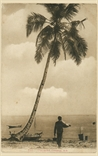 Picture of Coconut Penang