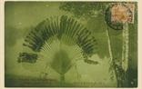 Picture of Travelling Tree, Botanical Garden, Kuala Lumpur